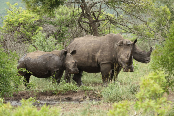 The private sector cannot be entrusted with rhino conservation
