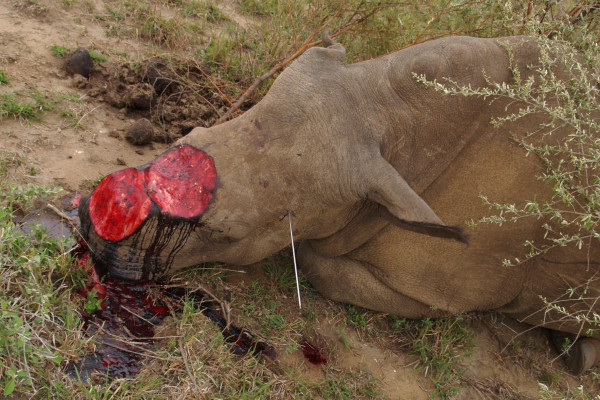 We simply need to increase the severity of punishment for poachers and traders